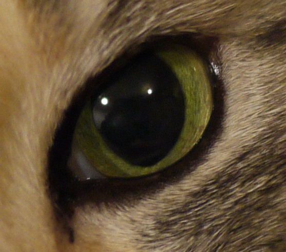 You can deduce some of a cat's pupil